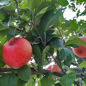 Agriturismo Aromi e Sapori - frutteti